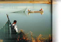 Aquatic Ecology Services
