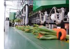 Furora Compact - Bunching Machines for Cut Flowers