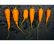 Costs put crunch on carrot growers' profits