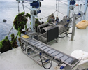 Declumper Outfeed Conveyors