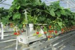 Model GM01  - Strawberries Cultivation Meteor Systems