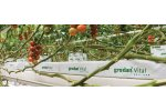 Grodan Vital - Products for Vegetable Growers