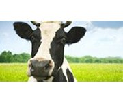 Australia – Major LCA study helps dairy farmers aim for GHG emissions reduction