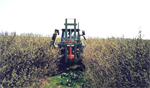 Blackcurrant Trimmers Machine