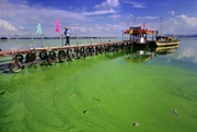 EPA Planning to Issue Health Advisories On Harmful Algal Blooms by May 2015