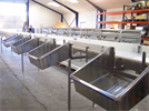 Grading Fish for Land Based Fish Processing