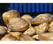 The Scoop on Shellfish Aquaculture