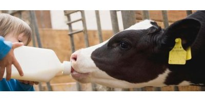 Beef Cattle Animal Health Products