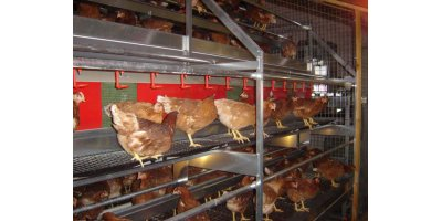 Cage-Free and Organic Market Egg Production