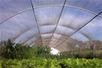 AHS - Quonset Cold Frame Structures