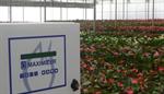 Priva Maximizer - Horticulture Equipment