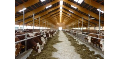 Technology Of Farms For Cattle