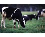 Dairy Farmers of Canada publicly launches its sustainability initiative