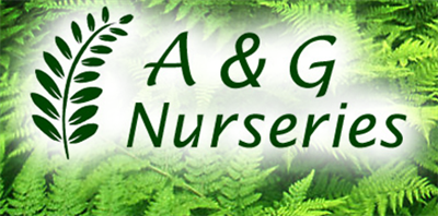 A & G Nurseries Inc