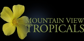 MountainView Tropicals