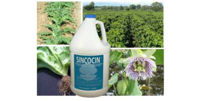 Sincocin - Liquid Concentrate