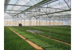 Model BK Series - Greenhouses