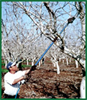 Pruning Equipment