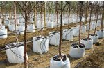Automated Drip Watering Systems for Commercial Tree Growers
