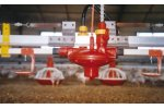 Broiler Drinking System