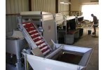 Delivery and Packing Systems for Cherries and Small Fruits