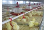 Multi Tier  - Model B3-B3 MAX - Caged Broiler