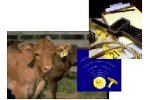 Cow Sense - Version EID - Individual Animal Sorting Management Software