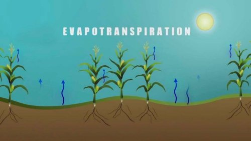 The Basics of Evapotranspiration
