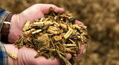 Biomass Drying