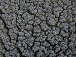 Municipal Biosolids Processing - Environmental