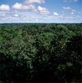 Global environment facility approves US$22m grant for biodiversity mainstreaming and protection in Brazil