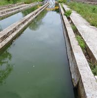 Kleen - Organic Waste Decomposer Lagoon with Bacteria and Enzymes