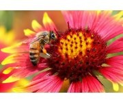Bees actively prefer nectar contaminated with neonicotinoid pesticides