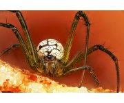 Orchard management practices may lead to changes in diversity of spiders
