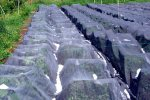 Hail Protection Netting for Fruit and Vegetable Crops