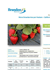 More Strawberries per Hectare - Californian Field Trial  - Crop Trial Bulletin