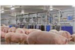 SowComp - Electronic Sow Feeding System