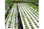 Ultraviolet disinfection systems for the horticulture industry - Agriculture - Horticulture