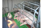 Farrowing Crate