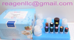 REAGEN - Model RND99063 - Nalidixic Acid ELISA Test Kit