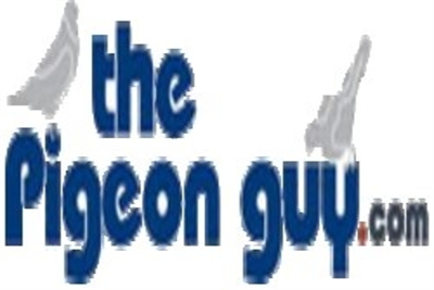 The Pigeon Guy