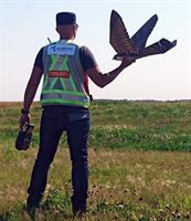 Robird - Remotely Controlled Robotic System